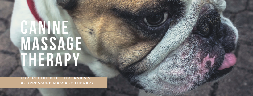 Pure Temple Organics and Canine Massage Therapy